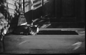 Nachbars Katze (Zeiss Super Ikonta 531/2)