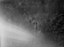 Morgen am Vago Weiher Hasselbald 6x4.5, Ilford Delta 400, Rodinal